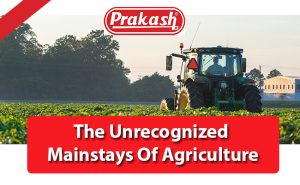The Unrecognised Mainstays Of Agriculture